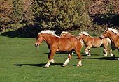 HOR 01 RK1006 10