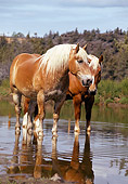 HOR 01 RK1023 03