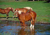 HOR 01 RK1025 01
