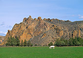 HOR 01 RK1055 02