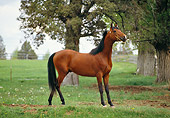 HOR 01 RK1075 03