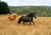 HOR 01 RK1098 10