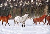 HOR 01 RK1218 03