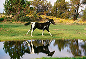 HOR 01 RK1251 02