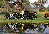 HOR 01 RK1258 39