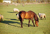 HOR 01 RK1304 02