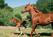 HOR 01 RK1392 13