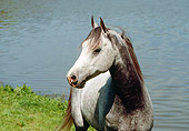 HOR 01 RK1523 02