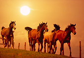 HOR 01 RK1553 07
