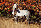 HOR 01 SS0001 01
