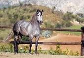 HOR 01 SS0003 01