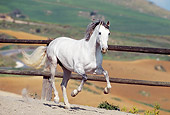 HOR 01 SS0007 01