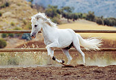 HOR 01 SS0008 01