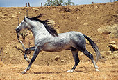 HOR 01 SS0011 01