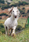 HOR 01 SS0012 01