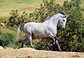 HOR 01 SS0014 01