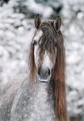 HOR 01 SS0017 01