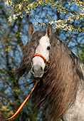 HOR 01 SS0018 01