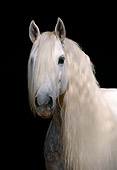 HOR 01 SS0020 01