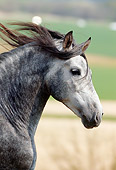 HOR 01 SS0022 01