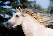 HOR 01 SS0023 01