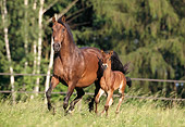 HOR 01 SS0029 01