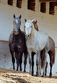 HOR 01 SS0031 01