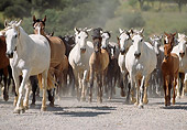 HOR 01 SS0034 01