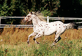HOR 01 SS0037 01