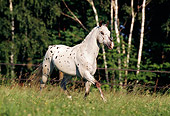 HOR 01 SS0038 01