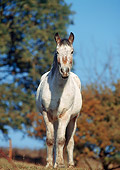 HOR 01 SS0039 01