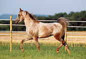 HOR 01 SS0040 01