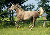 HOR 01 SS0041 01