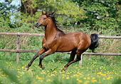 HOR 01 SS0042 01
