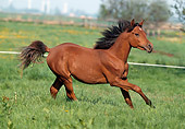 HOR 01 SS0043 01