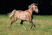 HOR 01 SS0047 01