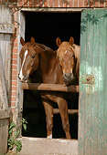 HOR 01 SS0051 01