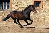HOR 01 SS0052 01