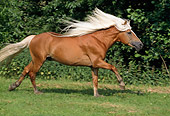HOR 01 SS0057 01