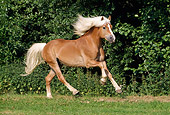 HOR 01 SS0058 01
