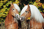 HOR 01 SS0063 01