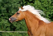 HOR 01 SS0064 01
