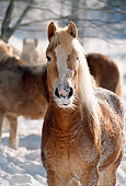 HOR 01 SS0065 01