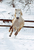 HOR 01 SS0067 01
