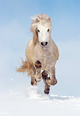 HOR 01 SS0068 01