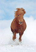 HOR 01 SS0070 01