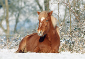 HOR 01 SS0074 01