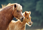 HOR 01 SS0079 01