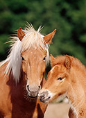HOR 01 SS0080 01