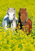 HOR 01 SS0084 01